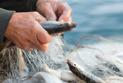 Pesce e frutti di mare